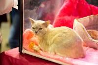 Пряничные кошки, Фото: 1