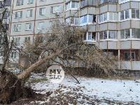 В Туле упавшее на девятиэтажку дерево повредило несколько балконов, Фото: 8