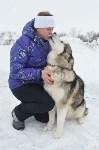 Праздник северных собак на Куликовом поле , Фото: 63