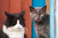 Тульские котики, Фото: 64