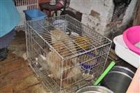 Похищенные собаки, Фото: 16
