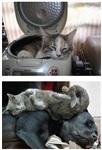 Коты спят где хотят, Фото: 5