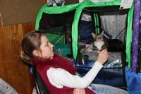 В Туле прошла международная выставка кошек, Фото: 23