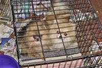 Похищенные собаки, Фото: 23