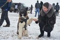 Праздник северных собак на Куликовом поле , Фото: 55