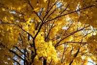 Золотая осень в Туле-2019, Фото: 61