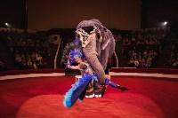 «Шоу Слонов» в Тульском цирке, Фото: 23