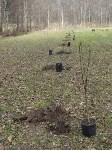 «Тульское землячество» высадило молодые деревья в музее-усадьбе «Дворяниново», Фото: 4