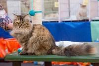 Выставка кошек в Туле, Фото: 86