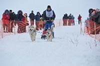 Праздник северных собак на Куликовом поле , Фото: 88