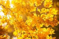 Золотая осень в Туле-2019, Фото: 118
