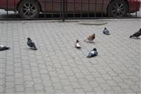 """В Туле проходит """"обнимашечный"""" флешмоб, Фото: 67"""