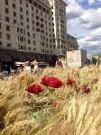 Цветочный джем: Тульское поле в Москве, Фото: 9