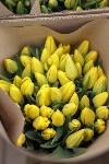 Тюльпаны , Фото: 34