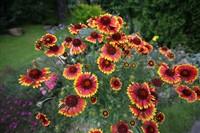 Цветочный рай Николая и Валентины Кузнецовых, Фото: 8