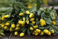 Тюльпаны , Фото: 27