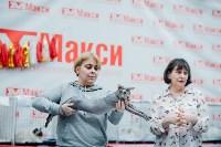 """Выставка """"Пряничные кошки"""" в ТРЦ """"Макси"""", Фото: 2"""