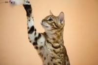 В Туле прошла выставка «Пряничные кошки» , Фото: 114