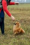 Международная выставка собак, Барсучок. 5.09.2015, Фото: 9