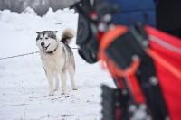 Праздник северных собак на Куликовом поле , Фото: 45