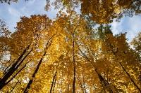 Золотая осень в Туле-2019, Фото: 65