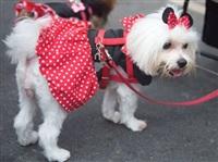 Собачий карнавал, Фото: 12