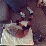 Коты в колготках, Фото: 7