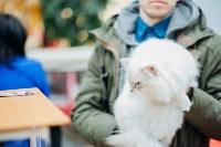 """Выставка """"Пряничные кошки"""" в ТРЦ """"Макси"""", Фото: 7"""