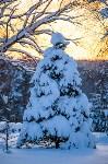 Снежное Поленово, Фото: 82