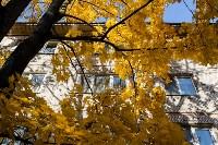 Золотая осень в Туле-2019, Фото: 56