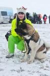 Праздник северных собак на Куликовом поле , Фото: 56