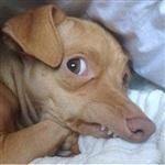 Самая фотогеничная собака, Фото: 4