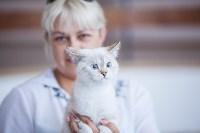 """Выставка """"Пряничные кошки"""". 15-16 августа 2015 года., Фото: 36"""