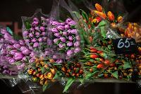 Цветы , Фото: 26
