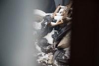 Крематорий для собак в Венёве, 24.03.2016, Фото: 11