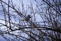 Весна 2020 в Туле: трели птиц и первые цветы, Фото: 29