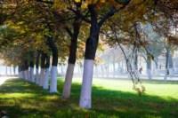 Центральный парк, утро, осень, Фото: 49