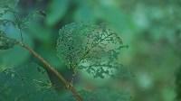 В Мясново погибает лес, Фото: 3