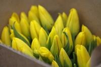 Тюльпаны , Фото: 17