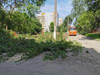 вырубка деревьев во дворе дома №33 по ул. Горького в Туле, Фото: 3