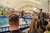 Шоу карибских дельфинов, Фото: 14