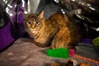 Пряничные кошки, Фото: 43