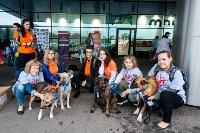 Благотворительный фестиваль помощи животным, Фото: 7