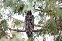 В Привокзальном районе поселились ушастые совы, Фото: 5