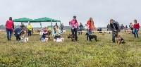 Международная выставка собак, Барсучок. 5.09.2015, Фото: 30