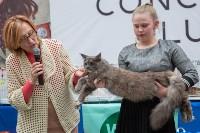 Выставка кошек в Туле, Фото: 8