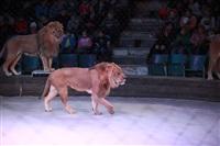 Новая программа в Тульском цирке «Нильские львы». 12 марта 2014, Фото: 22