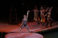 В Тульском цирке прошла премьера аква-шоу, Фото: 45