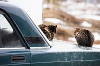Тульские котики, Фото: 54