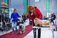 Выставка собак в Туле, Фото: 59